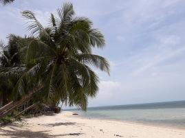 coconut100